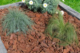 Vrac Ecorce de pin décorative 25/45 mm