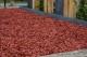 Paillage coloré rouge 20/40mm