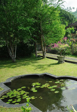 bassin de jardin avec des nénuphars